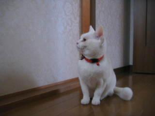 Tiro_004