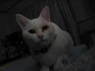 Neko_006