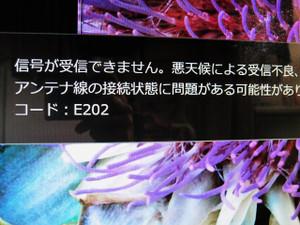 Neko_008_2